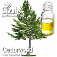 Pure Essential Oil Cedarwood - 50ml